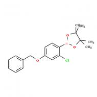 4-Benzyloxy-2-chlorophenylboronic acid pinacol ester