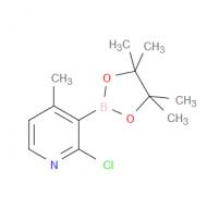 2-Chloro-4-methylpyridine-3-boronic acid pinacol ester